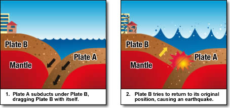 Inter-plate Earthquake